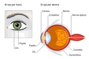 unas partes del ojo humano