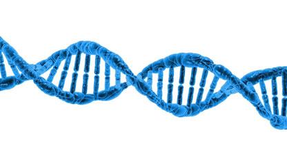 genes