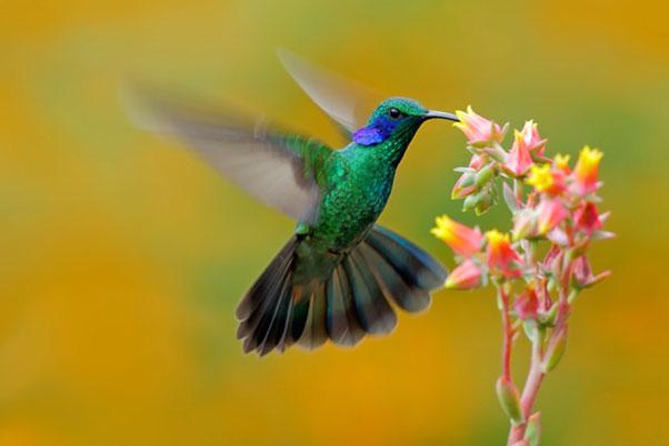 colibrí para pequeños